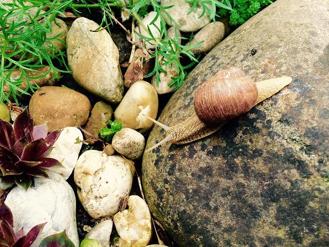 šnek na kameni