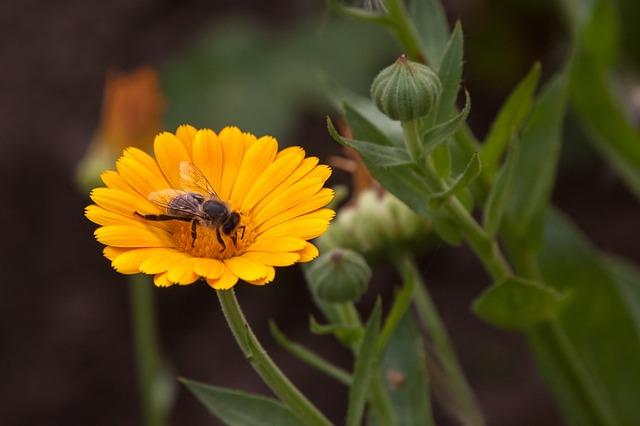 včela a měsíček